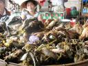 River crabs, Hoi An